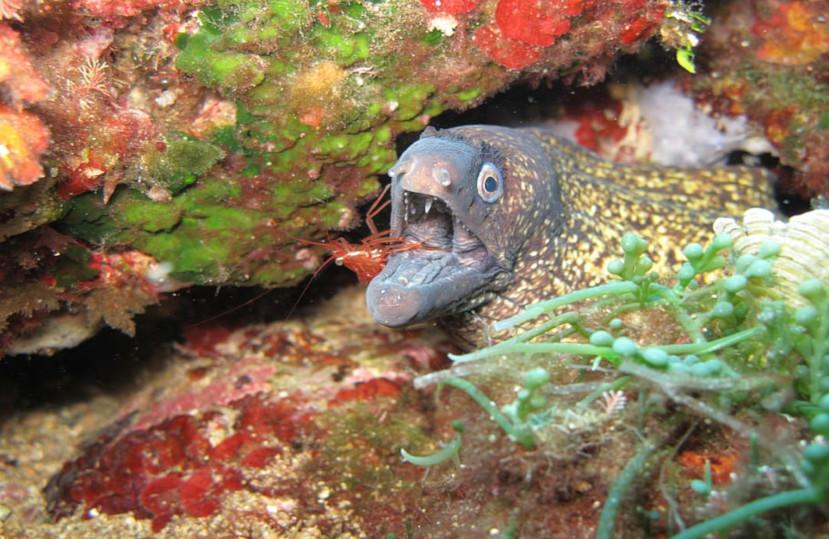 El Covid-19 ha aumentado de manera significativa los peces y mariscos en la reserva de las Illes Medes – Junio 2020