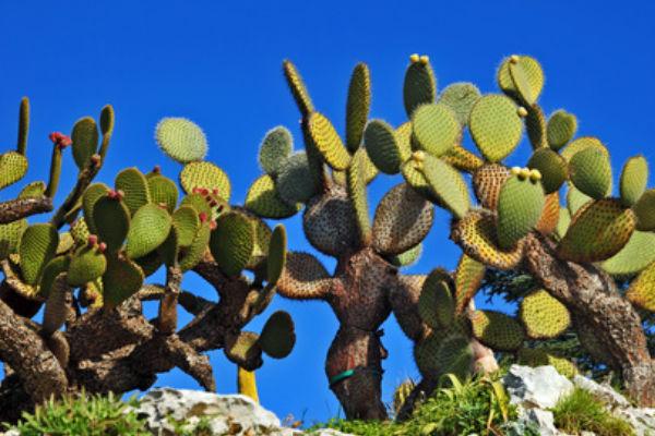Jardín botánico de Calella de Palafrugell