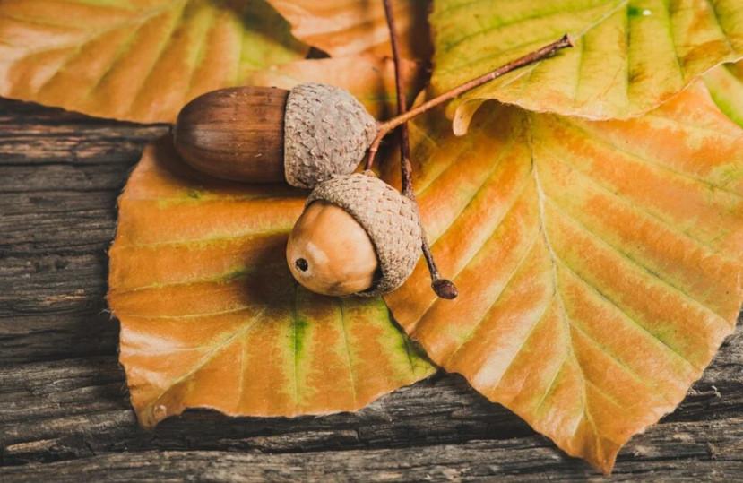 Actividades para disfrutar del otoño en la Costa Brava – Noviembre 2020